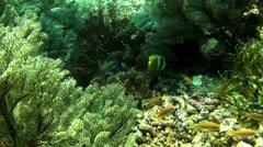 Sea fans in yellow light - HD Stock Footage
