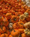 Heap of pumpkins Stock Photos
