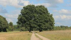Symmetric trees 2 Stock Footage