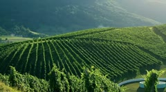 Crane shot of the sceneric wineyard with amazing landscape in the backgrounds - stock footage