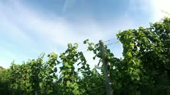 Crane shot of the sceneric wineyard with amazing landscape in the backgrounds Stock Footage