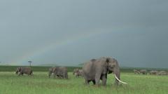 Elephants and a rainbow Stock Footage