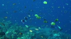 Reef fish swimming in beautiful blue water - HD Stock Footage