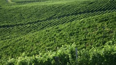 Still shot of a amazing wineyard Stock Footage