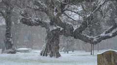 snowing in england: an oak tree in the blizzard - stock footage