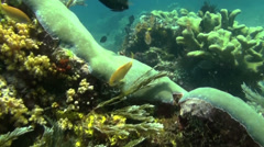 Fish on a beautiful coral reef - HD Stock Footage