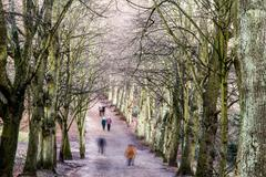 pedestrians in a tree-lined avenue in winter - stock photo