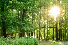 woodland sunrise - stock photo