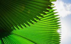 Palm frond against sky Stock Photos