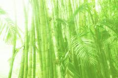 Aurinkoinen bambu lehto Kuvituskuvat