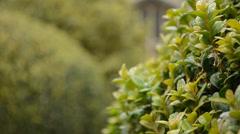 English garden Stock Footage