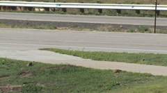 P02961 Prairie Dogs and Traffic in City Stock Footage