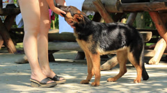 Alsatian Dog Stock Footage