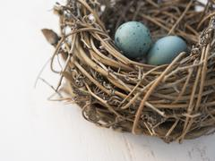 Closeup of eggs in a nest Stock Photos