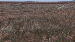 Short grass prairie scene Stock Footage