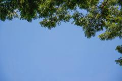 Tree top with blue sky Stock Photos