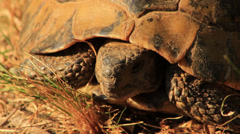 Turtle Close Up - stock footage