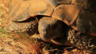 Stock Video Footage of Turtle Close Up