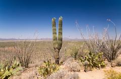 Sonoran vista Stock Photos