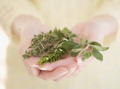 Woman holding fresh herbs - stock photo