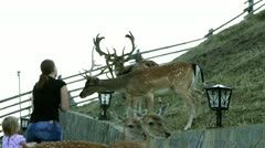 Young woman feeding deers Stock Footage