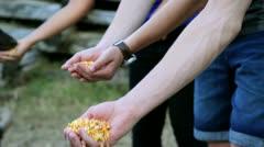 Young people feeding deers Stock Footage