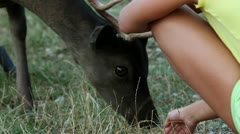 Small girl is caressing and feeding a deer Stock Footage