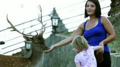 Young woman is feading deers Stock Footage