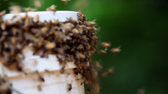 Swarm of bees fly round honey pot lid Stock Footage