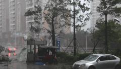 Hurricane Winds Batter City Street - stock footage