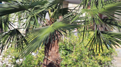 Palms leafs Stock Footage