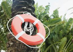 Life preserver hanging on palm tree Stock Photos