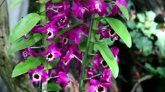 Orchid's blossom in forest Stock Footage