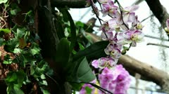 Orchids in natural environment Stock Footage
