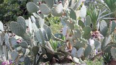 Prickly cactus plant Stock Footage