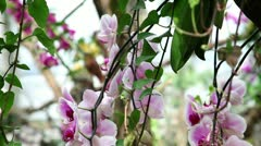 Pink orchid's blossom Stock Footage