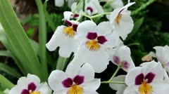 White orchid close up Stock Footage