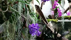 Total of a orchid's garden Stock Footage