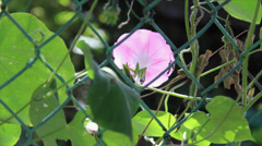 Pink flower behind metal grate Stock Footage