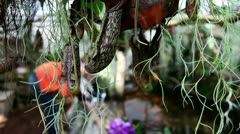 Fishpond in a garden Stock Footage