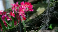 Clip of pink orchid Stock Footage