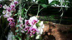 Blossoming orchids in forest Stock Footage