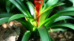 Close up shot of a nice red orchid Stock Footage