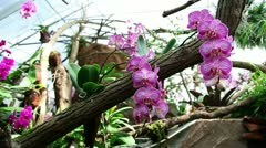 Group of pink orchids Stock Footage