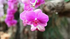 Nice violet orchid Stock Footage