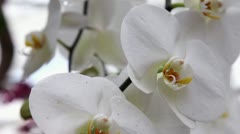 Nice white orchid Stock Footage