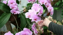 Woman putting butterfly on orchid Stock Footage