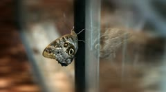Buttterfly on window where is its reflection Stock Footage