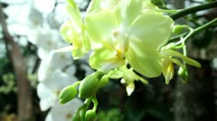 White orchid Stock Footage
