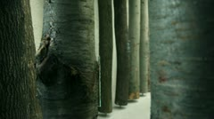 Several different tree trunk exhibited in a museum Stock Footage